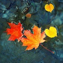 autumn-leaves-fragrance.jpg