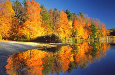 Berkshires-Fall-Foliage-Leaves.jpg