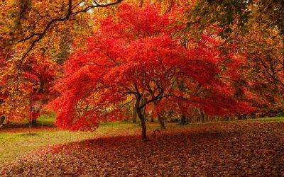 bodnant-garden-autumn-wales-xlarge.jpg