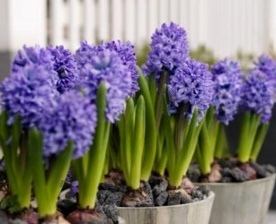 Easter-flowers-perfect-Easter-gifts.jpg