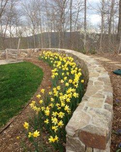 daffodils_6087.jpg