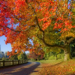 fall-colour--stanley-park-seawall--vancouver--british-columbia--canada--879671352-5a77c1c8642d...jpg