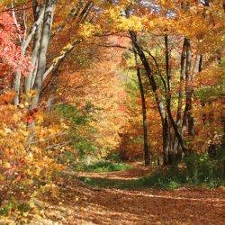 fall-trail-600x600.jpg