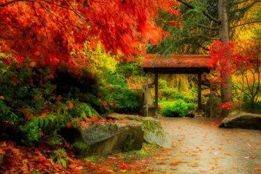 Depositphotos_176420866_l-2015-Japanese-garden-Seattle-maple-trees-fall-foliage.jpg