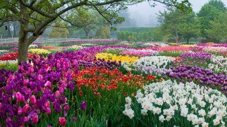 150656_Bulb display - Idea Garden_Albee_ Larry_GimpOptimized.jpg