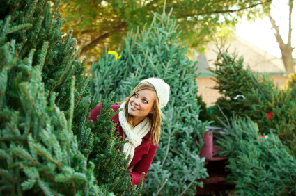 Tips for Keeping Your Cut Tree Fresh