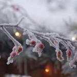 Once Upon a Foggy Christmas