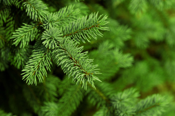 Tips for Keeping Your Christmas Tree Fresh