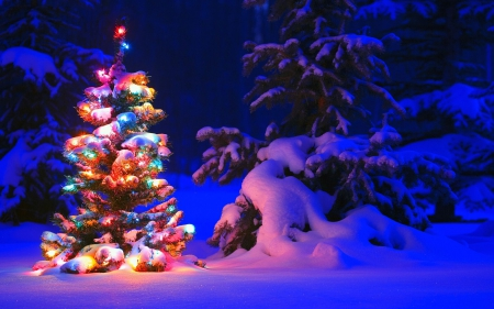 A Different Kind of History of Christmas Trees