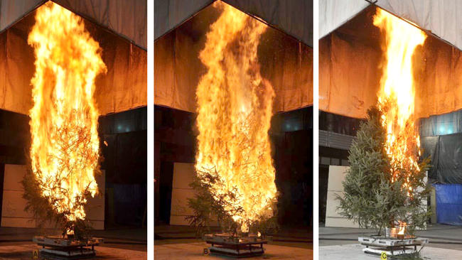 how fast does a christmas tree burn my merry christmas - How Long Does A Christmas Tree Last