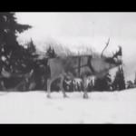 Footage of 1920s Era Santa Training Reindeer