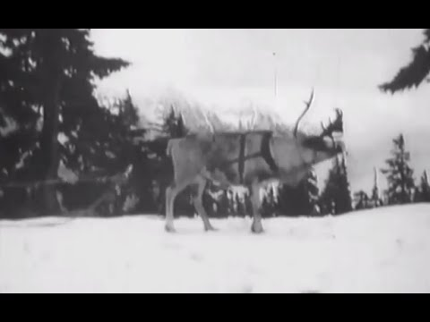 Footage of 1920s Era Santa Training Reindeer
