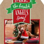 Pet Christmas Cards